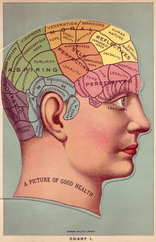 Phrenology head for architecture
